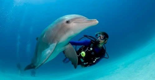 Never Fall in Love with a Scuba Diver...