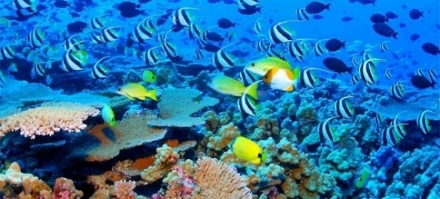 The Best Warm Water Diving Locations