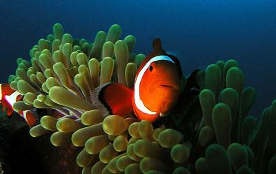 Aquarium Photo Dive