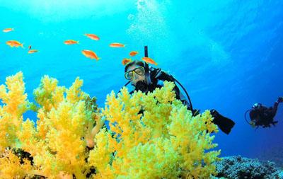 Aquarium Dive Gift Certificate